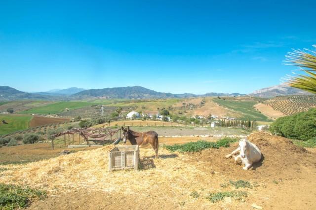 BOEAEP2480 67183 640 V1 D0F1 - Naturaleza y mundo ecuestre fusionados en una preciosa finca en Álora (Málaga)
