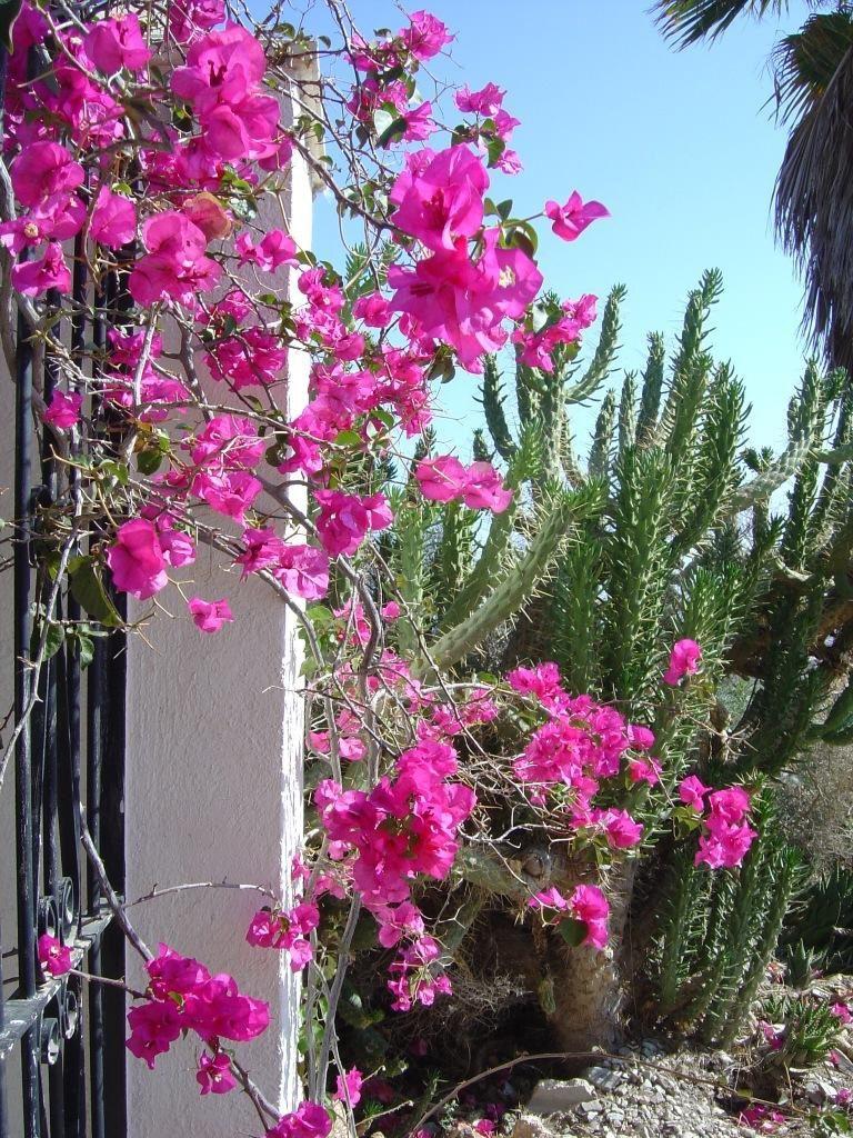 aguilas murcia 768x1024 - 15 viviendas que ya se visten de primavera: flores y espacios abiertos para disfrutar