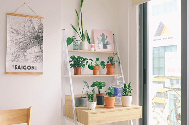 decoracion plantas - Nuevas tendencias para decoración otoño 2020