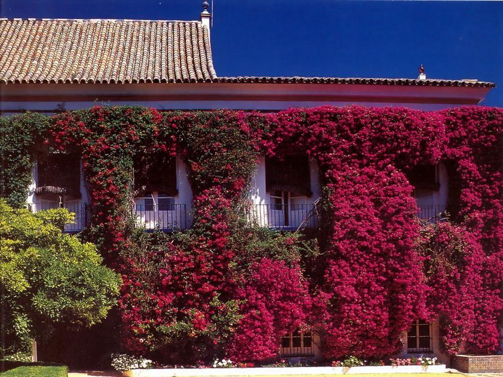 detalleexterior1 - El Palacio de las Dueñas en Sevilla, la propiedad más querida de la Duquesa de Alba