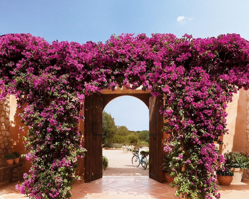entrada110 - Paraíso de luz y buganvillas en una preciosa casa en Santanyí (Mallorca, Baleares)