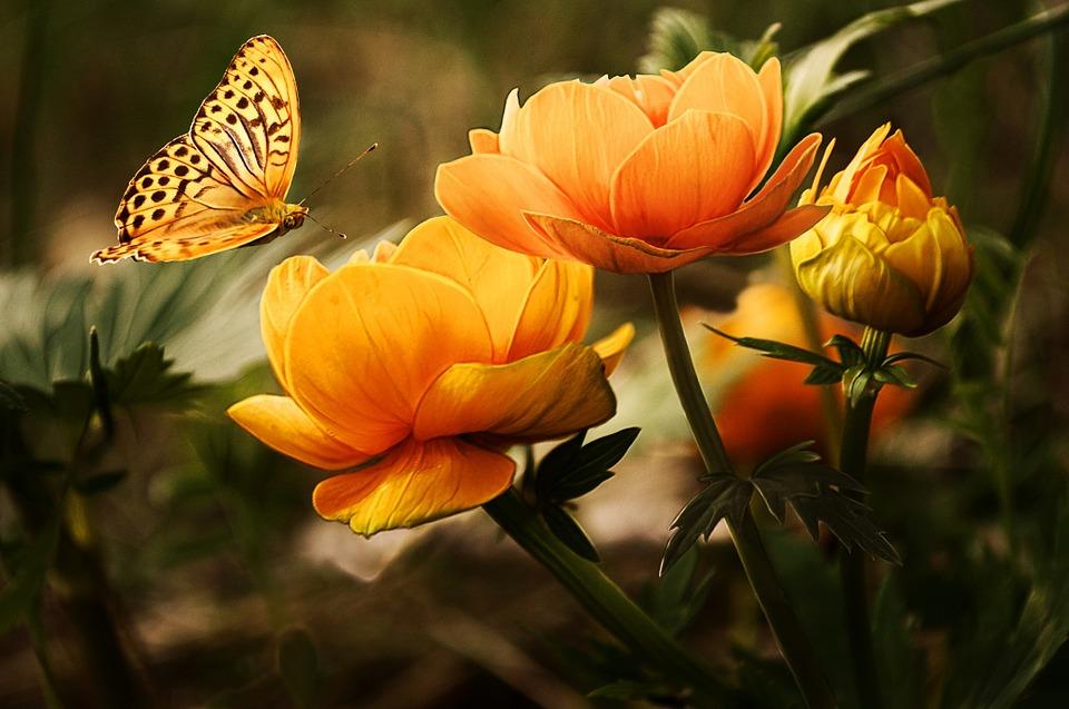 flowers 19830 960 720 1 - Plantas y flores para darle color al otoño y a tu hogar