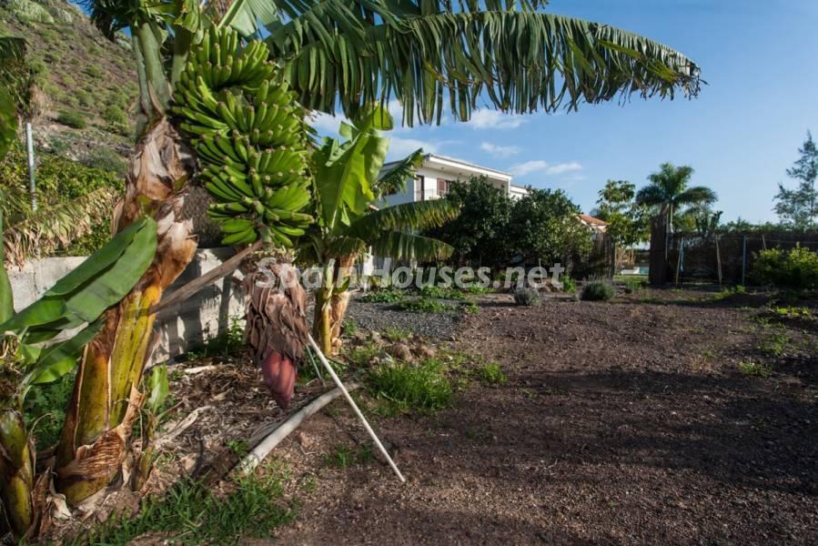 parcelajardin casa - Sabor canario en una fantástica casa con piscina y jardin en Arona (Tenerife)
