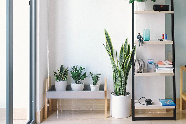 planta - Renueva el look de tu casa: tendencias en decoración para primavera de 2021