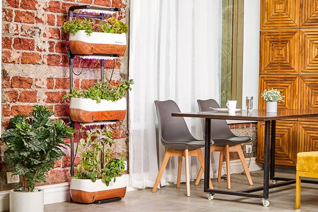plantas terraza - Ideas para decorar una terraza fáciles y asequibles