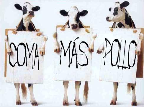 Vacas y pollos